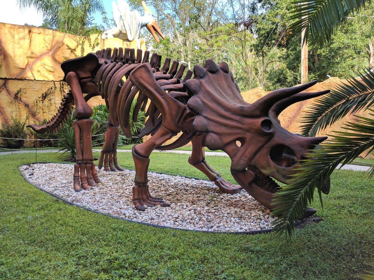 Triceratops Dinosaurs Skeleton