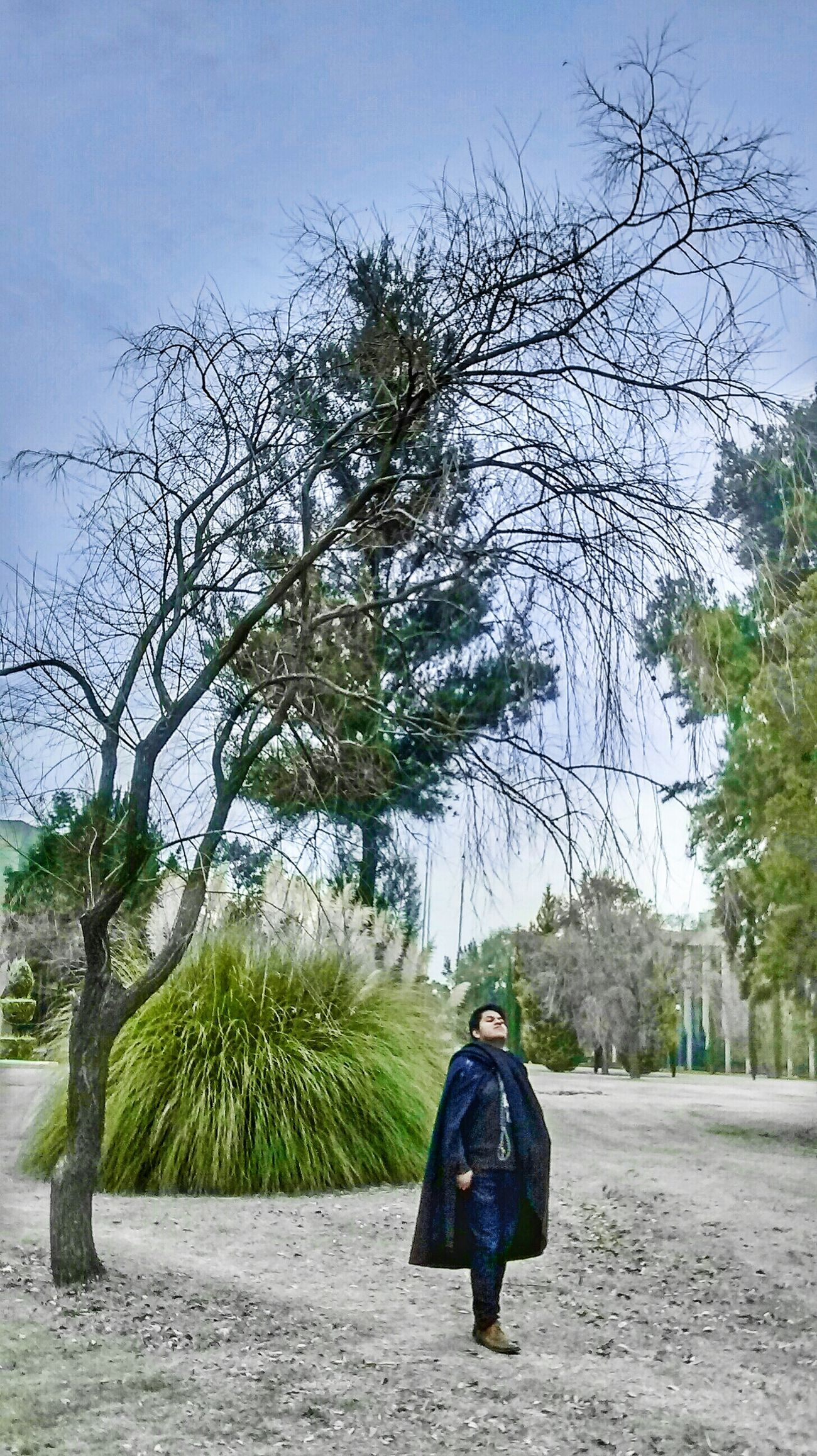 Verde Jardin Nature Arboles Arbol. Madera Mexicolors Freelance Life Natural Naturaleza Rustic Mexicotradicion Traveling Azul Climate Nature Photography Colores Magic Magical Magia Otoñal Magia.