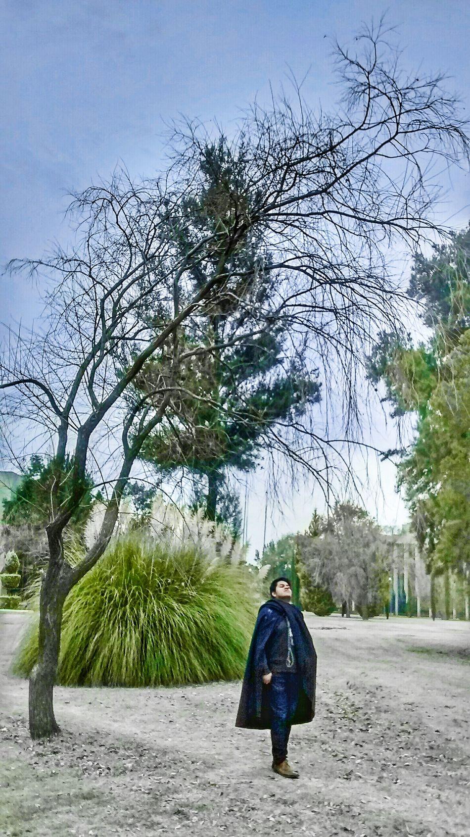 Verde Jardin Nature Arboles Arbol. Madera Mexicolors Freelance Life Natural Naturaleza Rustic Mexicotradicion Traveling Azul Climate Nature Photography Colores Magic Magical Magia Otoñal Magia.
