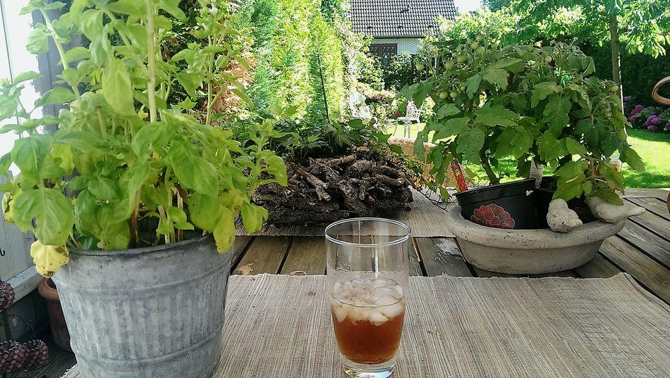Nature Drink Freshcoldhotfeeling Summer 🌞