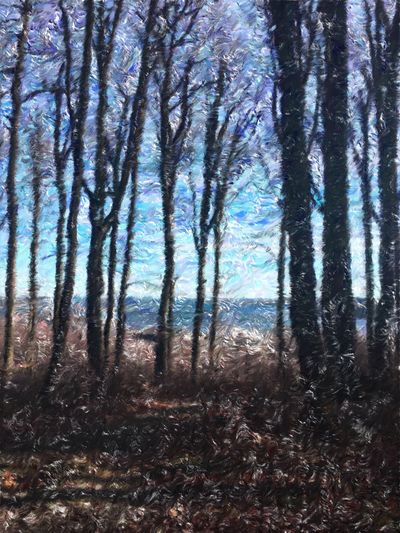Image taken with an IPhone, used an app and made a picture that looks like a painting. Lots of fun 😀 Tree Nature Day No People Outdoors Bøkeskogen, Larvik Norway 🇳🇴