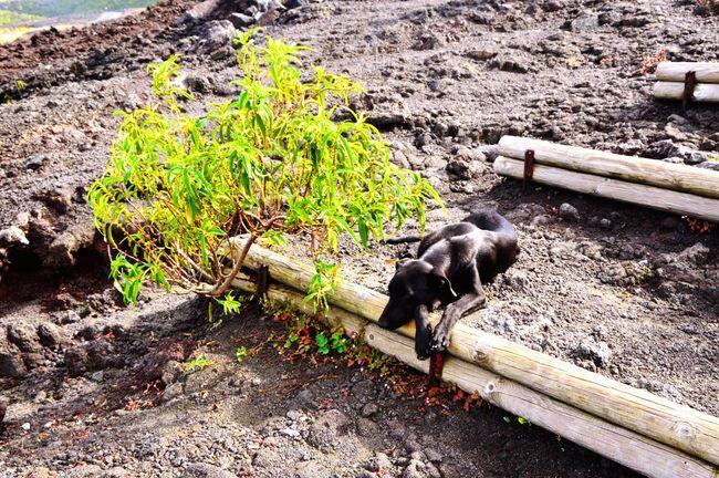 Nikon Nature Île De La Réunion  Hicking Dog