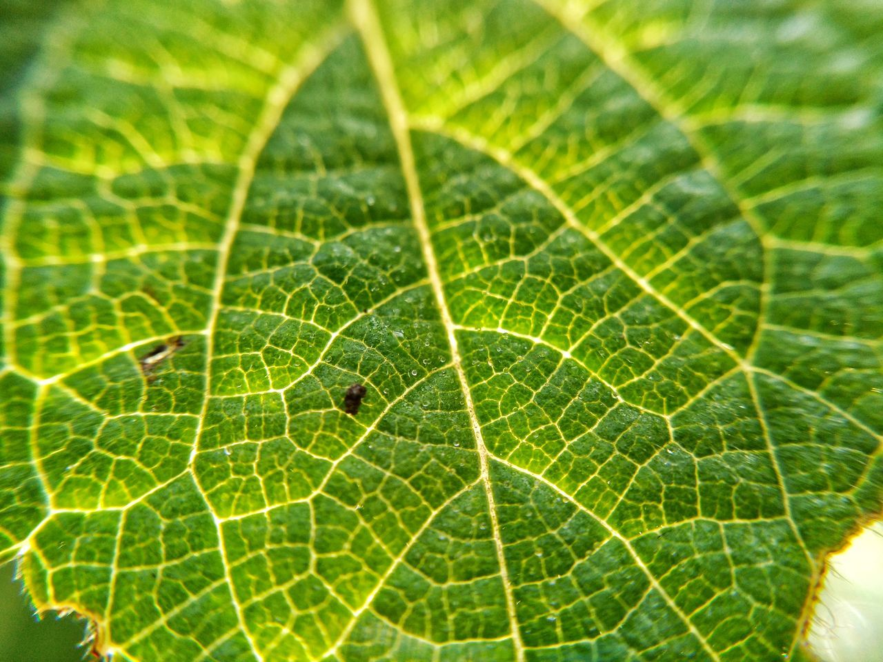 Plant Close-up Animal Themes Nature One Animal Focus On Foreground Insect No People Leaf Outdoors Green Color Spider Web Spider Fragility Animals In The Wild Animal Wildlife Beauty In Nature Day Freshness Web