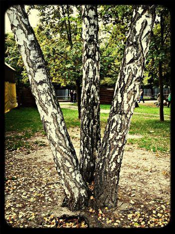 Trees Treescollection Bäume Nature