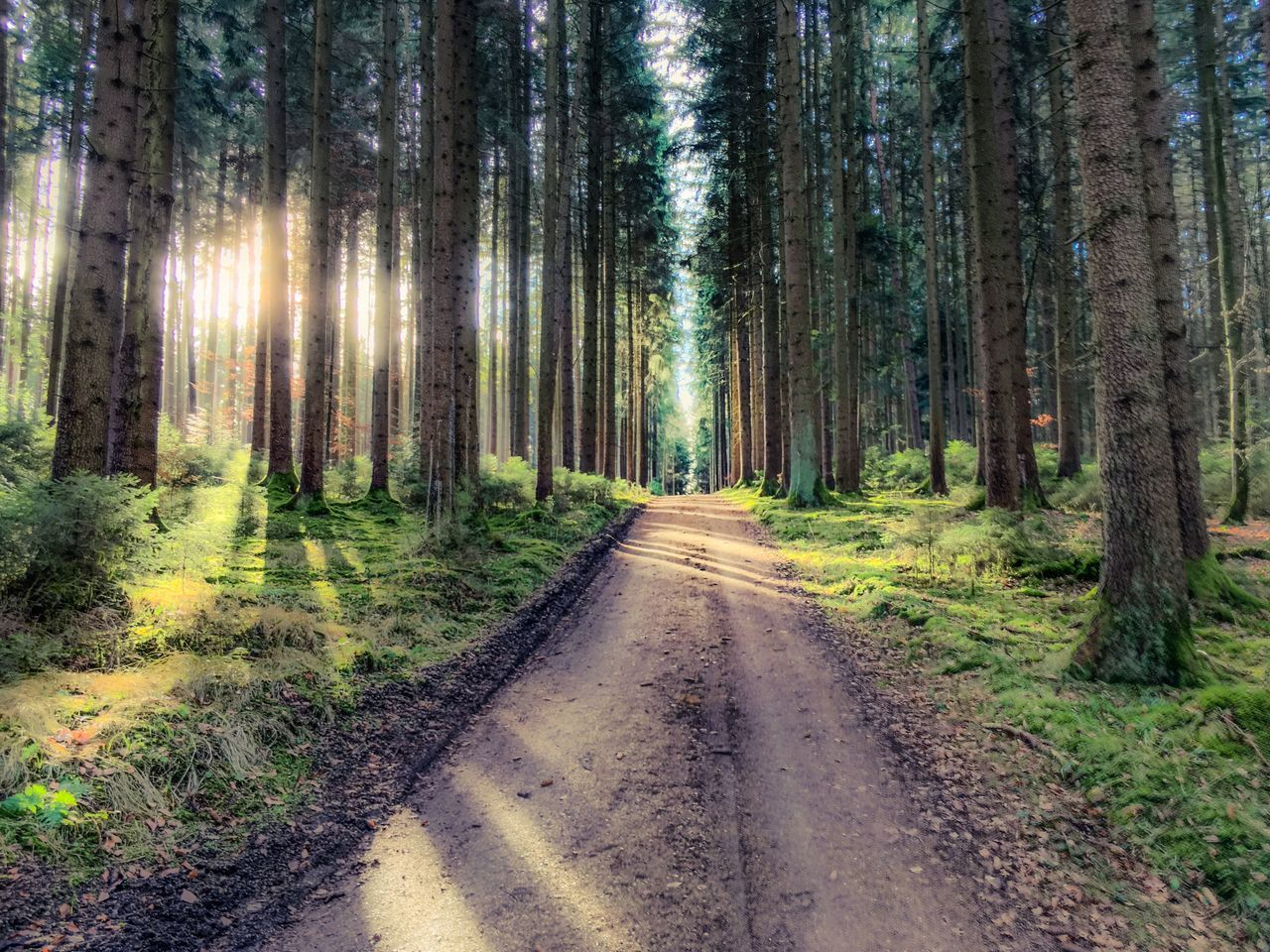 forest, tree, nature, the way forward, tree trunk, straight, outdoors, no people, day, scenics, road, beauty in nature, landscape, grass, sky