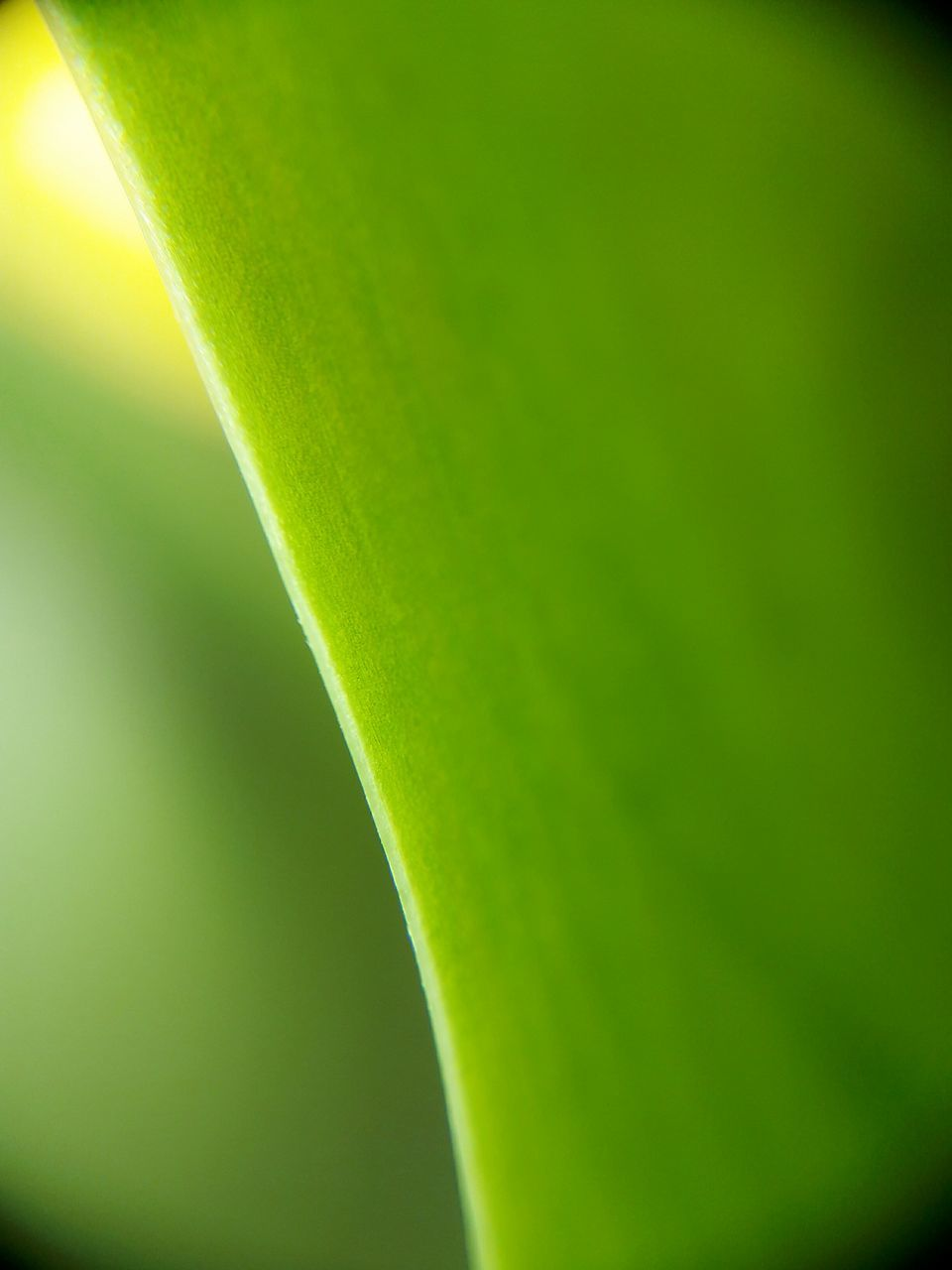 green color, beauty in nature, nature, freshness, growth, close-up, outdoors, day, no people