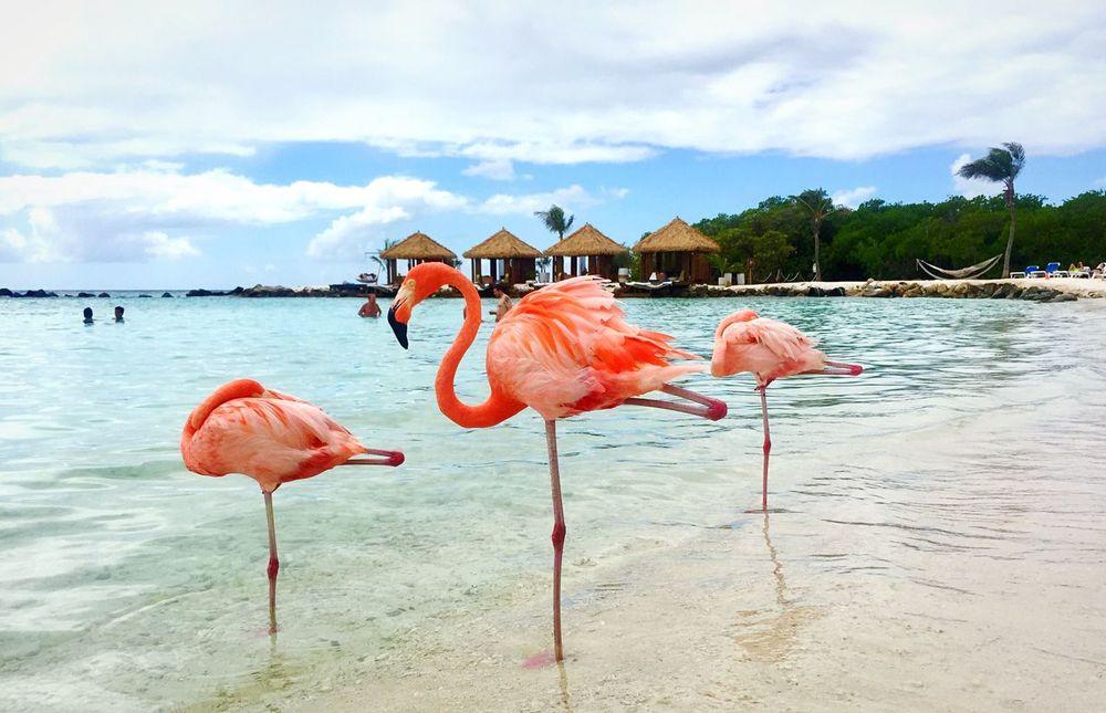 Water Flamingo Sky Nature Beach Dutch Caribbean Ocean View Renaissance Aruba Resort & Casino Animal Themes Enjoying Life Aruba One Happy Island Colourful