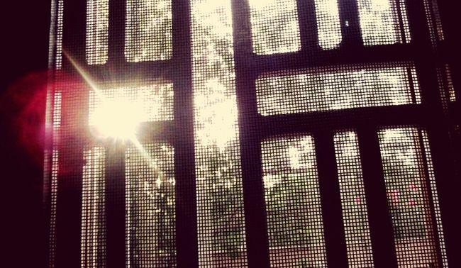 Love photography in small things Sun Rays Penetrating Captured Sun