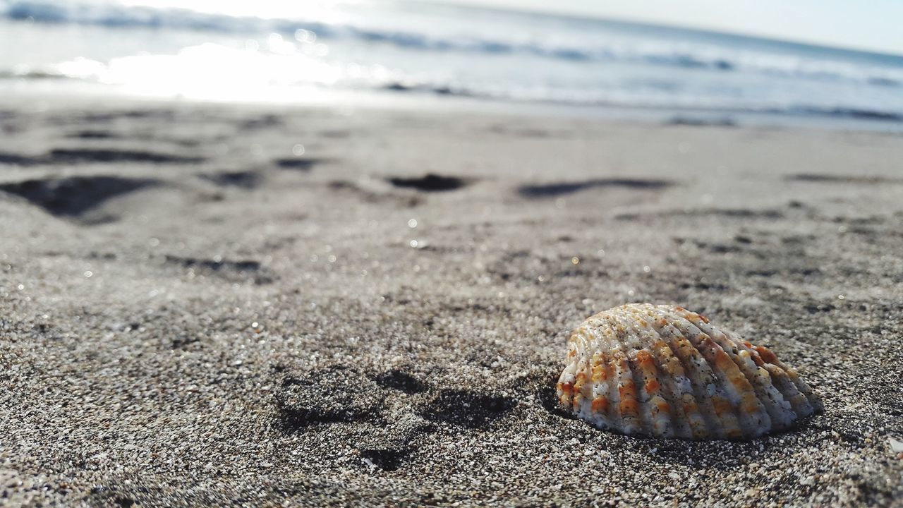 Beach Sea Sand Nature Shore One Animal Animal Shell Animal Themes Close-up Beauty In Nature Water Sea Life Animals In The Wild Day Sea Turtle No People Hermit Crab