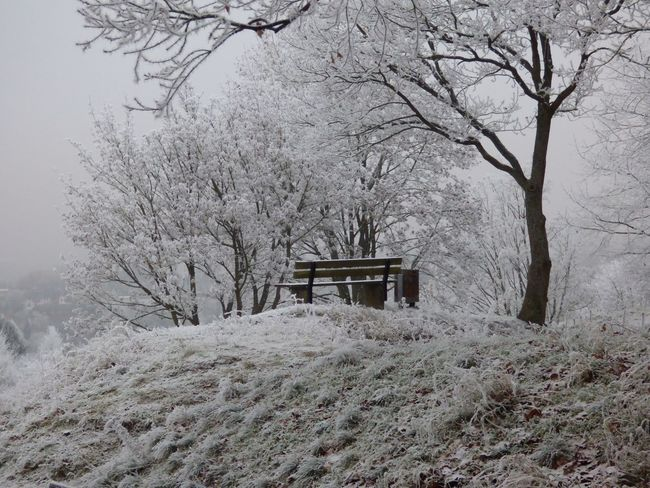 Shades Of Winter Tree Winter Nature Snow No People Cold Temperature Day Branch Architecture Built Structure Outdoors Landscape Beauty In Nature Scenics Bare Tree
