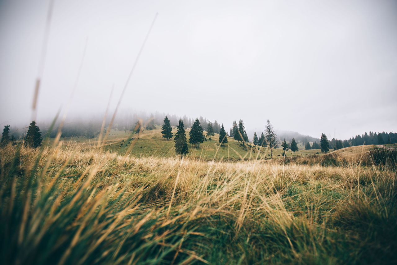 Beautiful Nature Beutiful  Cloud Countryside EyeEm Nature Lover Field Forest From My Point Of View Grass Mystery Nature Outdoors Landscapes With WhiteWall Landscapes With Whitewall Winners