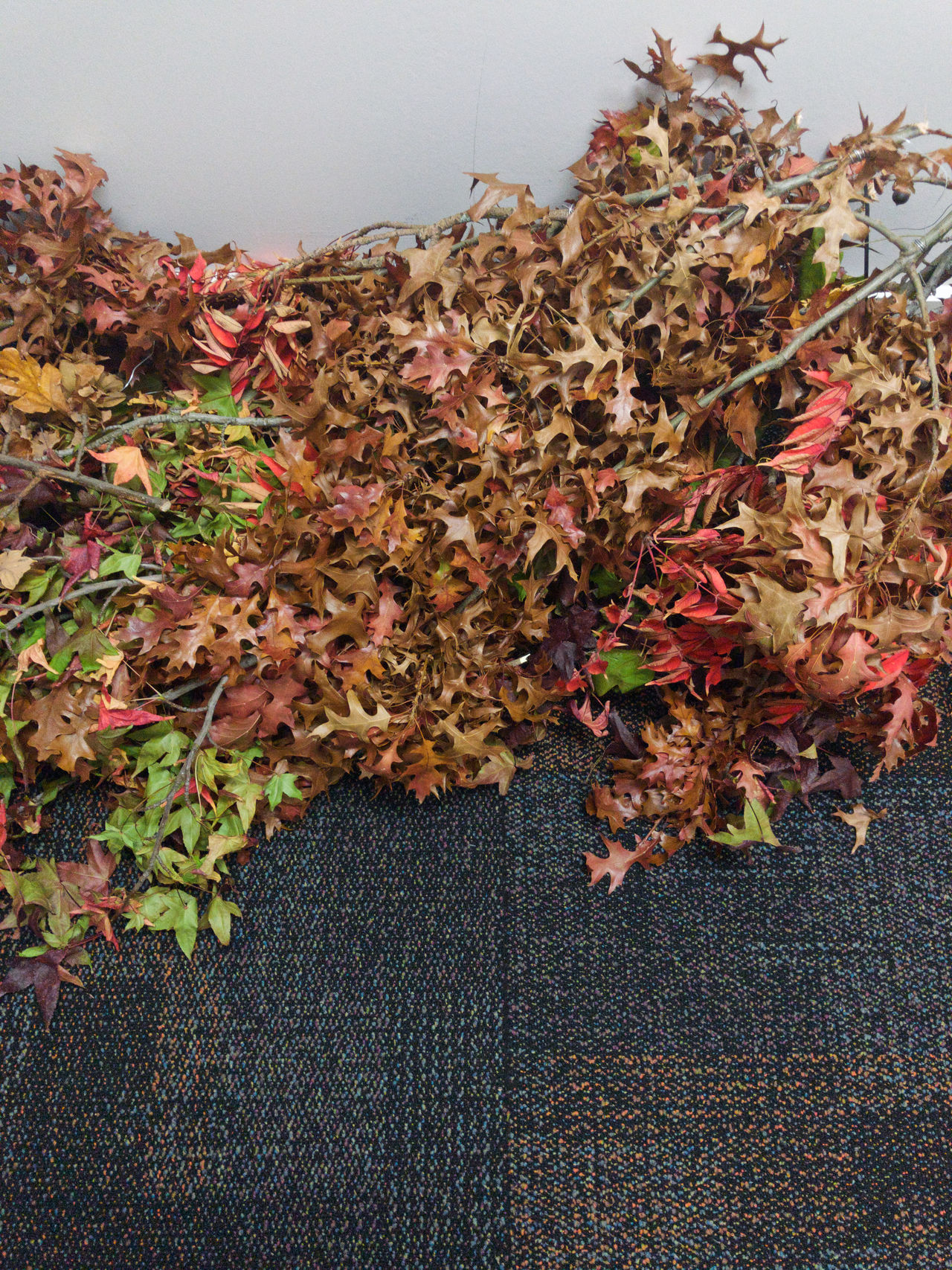 Abundance Autumn Beauty In Nature Change Close-up Dry Fragility Growth Ivy Leaf Leaves Nature No People Plant
