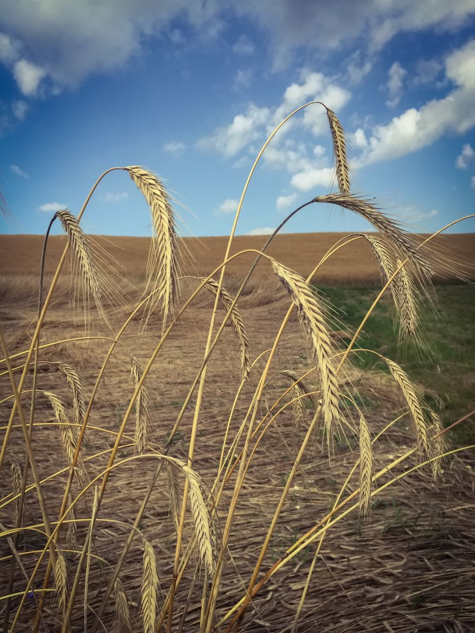 Dry Plants On Field Against Sky