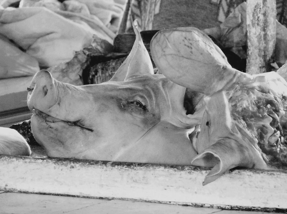 Beautiful stock photos of death, Animal Body Part, Animal Head, Butchers Shop, Day