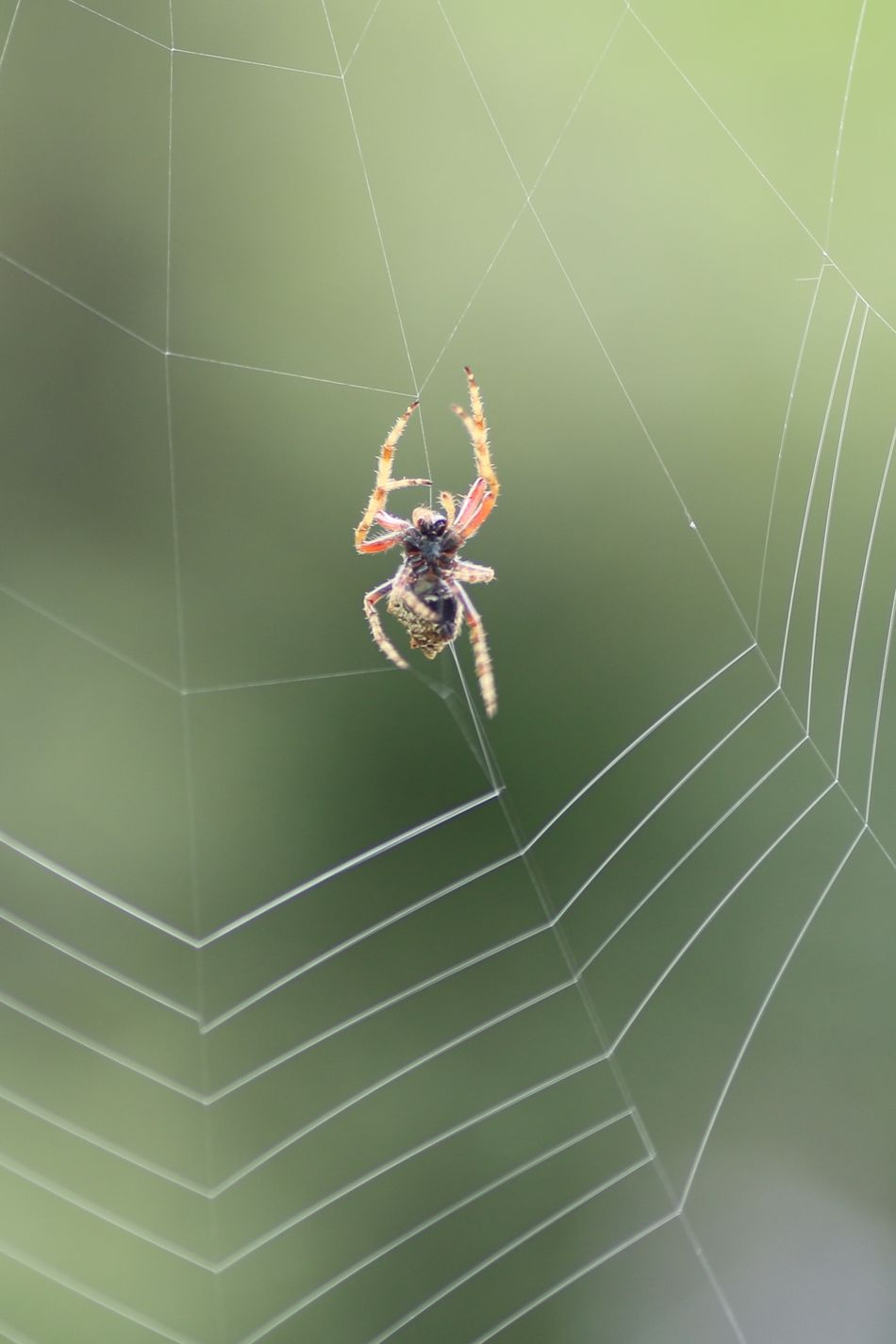 Animal Themes Animal Wildlife Animals In The Wild Close-up Day Fragility Insect Nature No People One Animal Outdoors Spider Spider Web Web