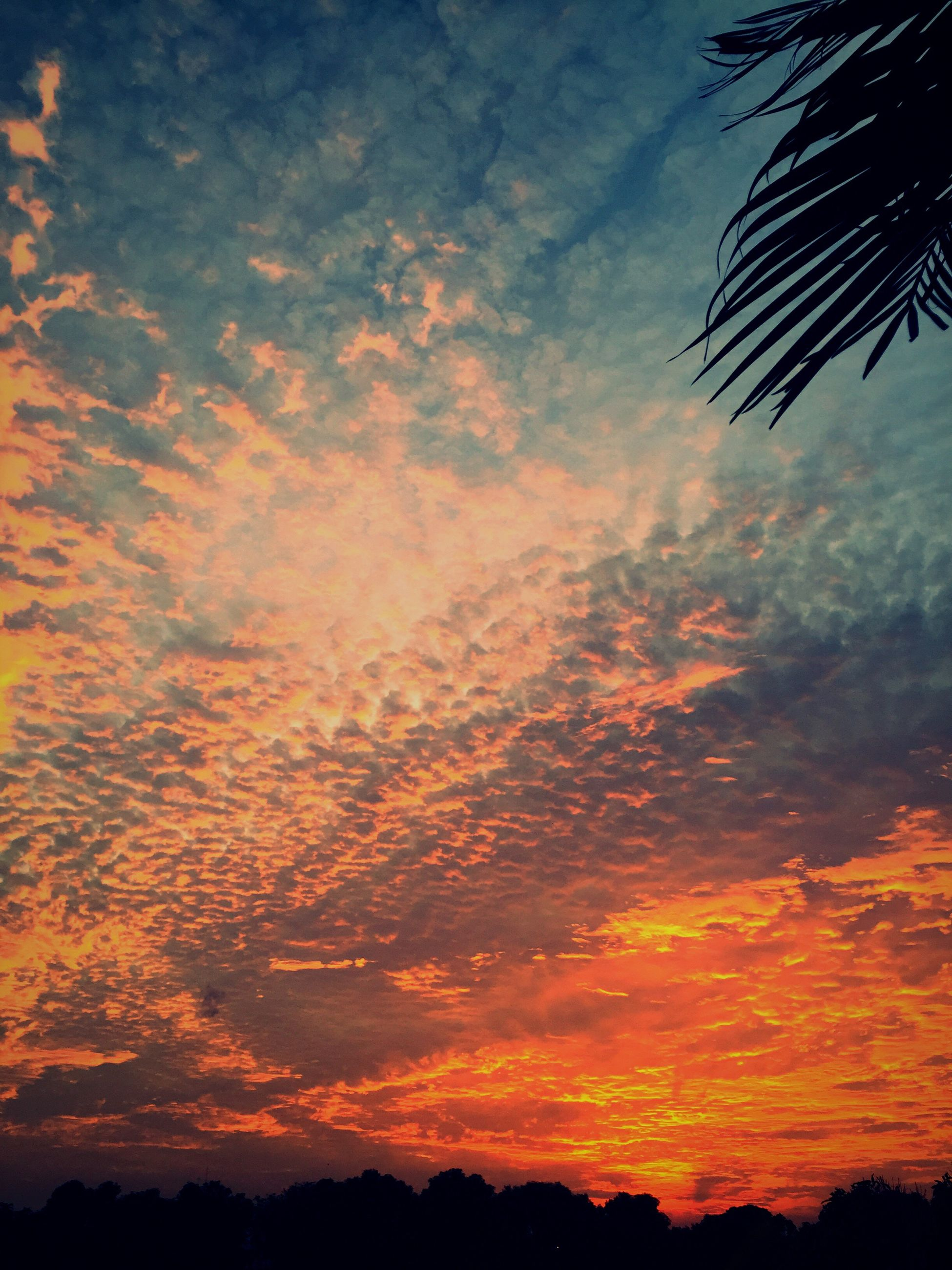 sunset, silhouette, sky, beauty in nature, scenics, tranquility, tranquil scene, cloud - sky, orange color, low angle view, nature, tree, dramatic sky, idyllic, cloud, majestic, cloudy, outdoors, no people, moody sky