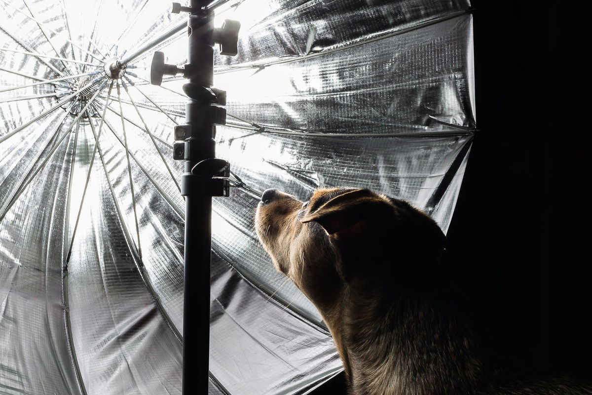 Animal Themes Circle Of Light Close-up Curiosity Dog Light Light Dome Parabolic Powerful Reflect Reflector Suffused With Light Anton Fascination