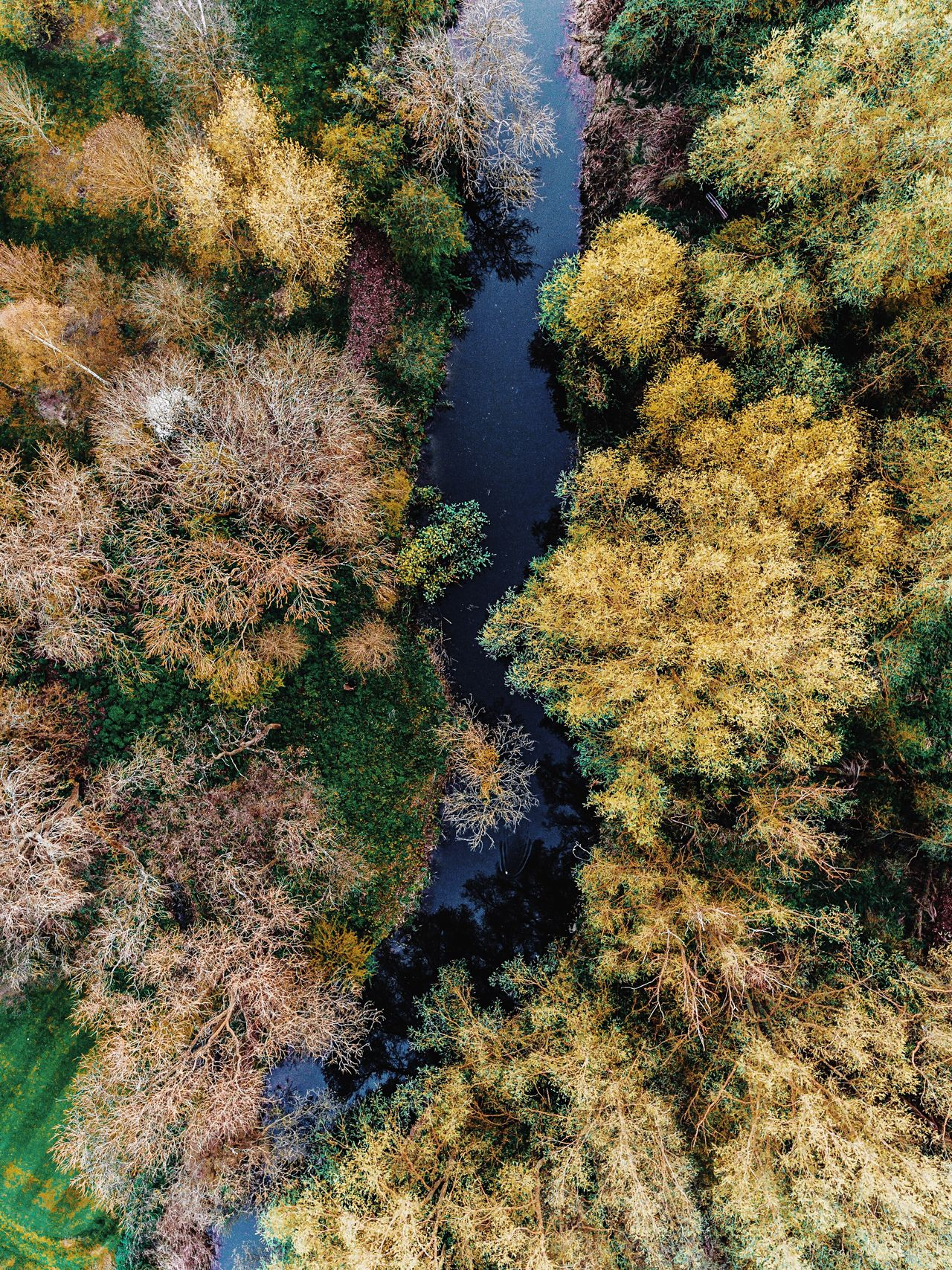 Flying with the current Nature Beauty In Nature Growth No People Outdoors Water Grass Day Tree Aerial Photography Tranquility Landscape Drone  Rural Scene