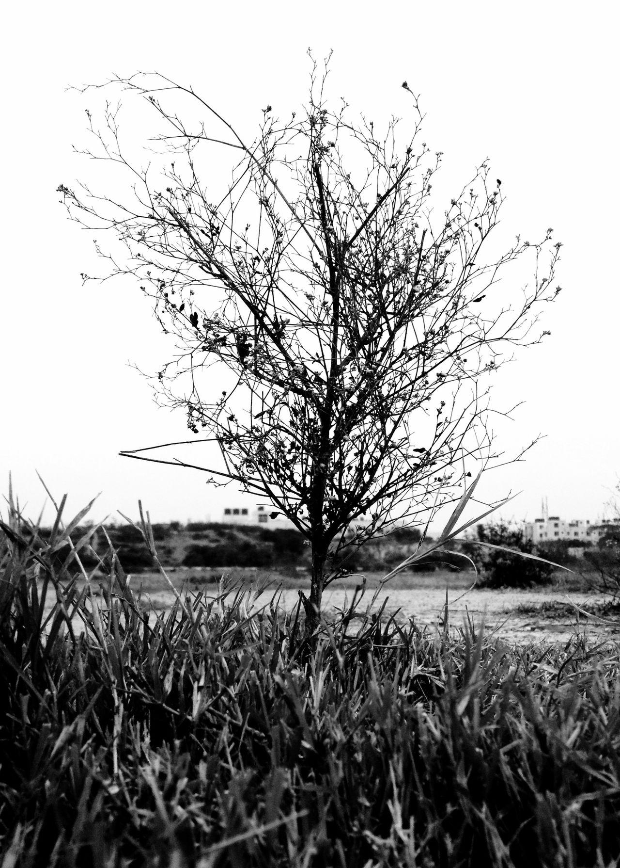 Plant Grass Blackandwhite Photography Black And White Photography Blackandwhitephotography IPhoneography Iphoneonly IPhone Iphonephotography Iphonesia IPhone Photography IPhone 4S IPhone4s Mobilephotography Mobile Photography Mobilephoto Bangalore India