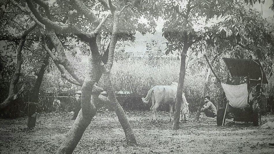 "Capturing original picture (Kompas/Totok Wijayanto) on page 27th of Kompas Daily Newspaper (10/9/15) had titled ""Istirahat Siang"". Sais Delman Wisata"