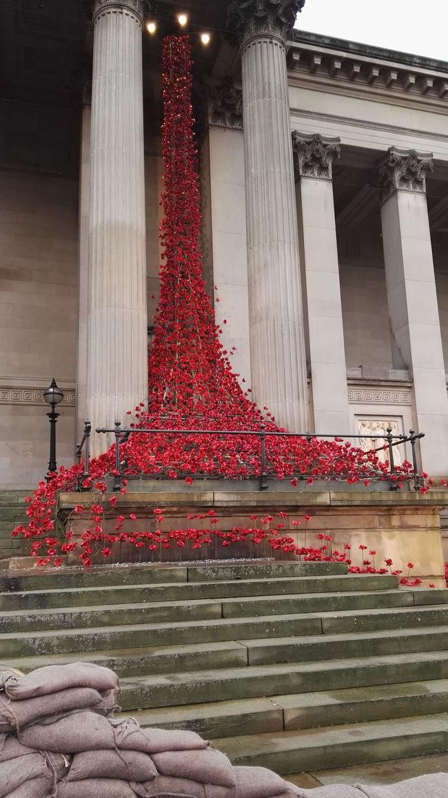 Liverpool, England St George's Hall Liverpool Poppy Flowers