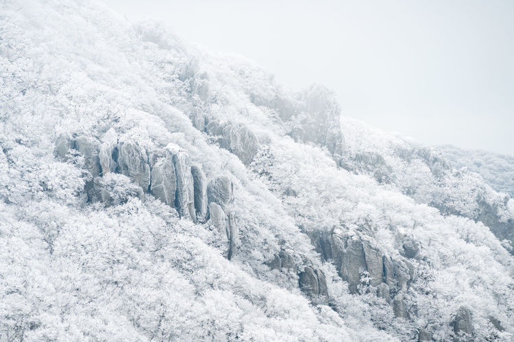 ASIA Halla Mountain Jeju Korea National Park Volcano Landscape Beauty In Nature Cold Temperature Day Forest Freshness Landscape Mountain Nature No People Outdoors Pine Tree Scenics Sky Snow Snowing Tree Volcano White Color Winter