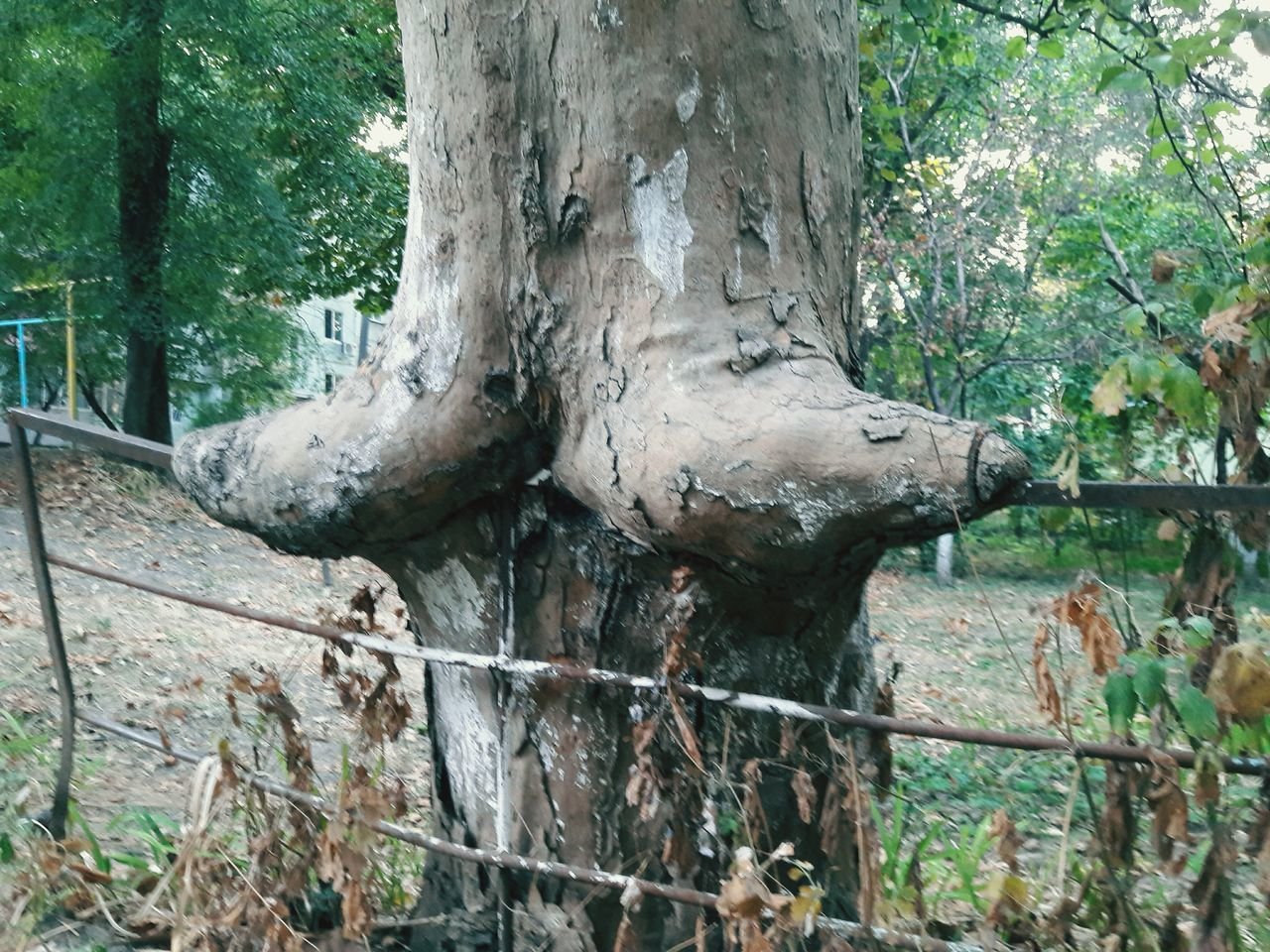 tree, tree trunk, nature, no people, growth, branch, outdoors, day, forest, close-up, beauty in nature
