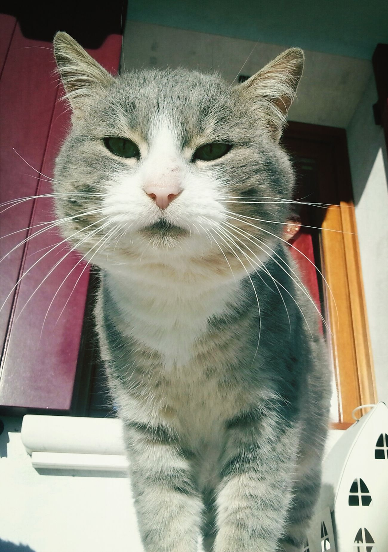 Frappè ♡ Cats
