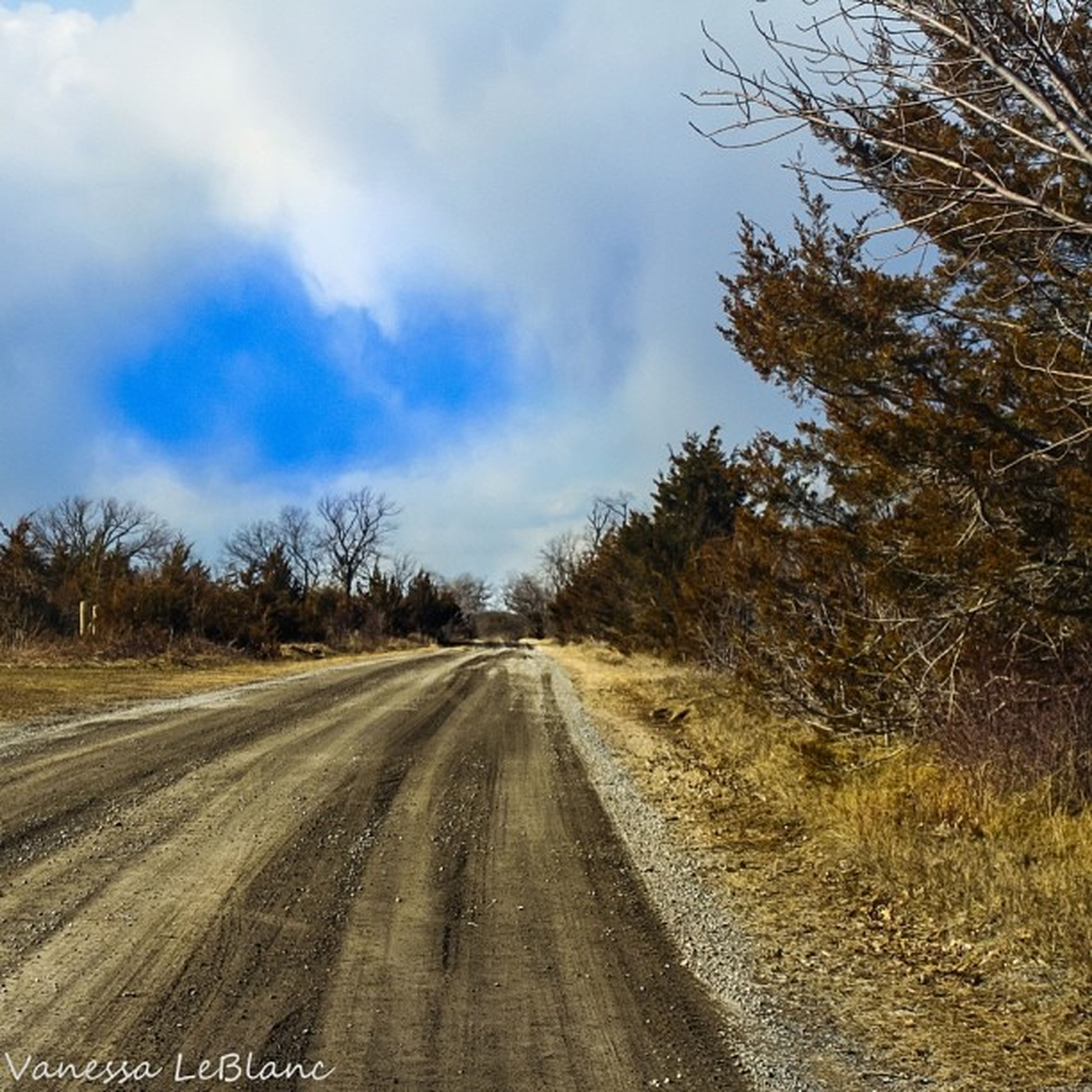 the way forward, transportation, diminishing perspective, sky, vanishing point, tree, road, cloud - sky, tranquility, landscape, tranquil scene, nature, cloudy, cloud, country road, growth, empty road, outdoors, no people, field