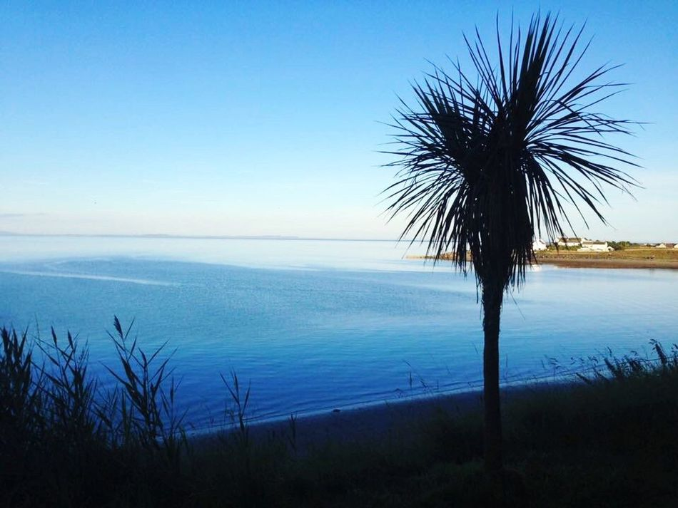 Scotland Drummore Sea Blue Horizon Over Water Nature Beauty In Nature Scenics Tranquil Scene Sky Water Tranquility Outdoors Beach No People Palm Tree Growth Grass Tree Day
