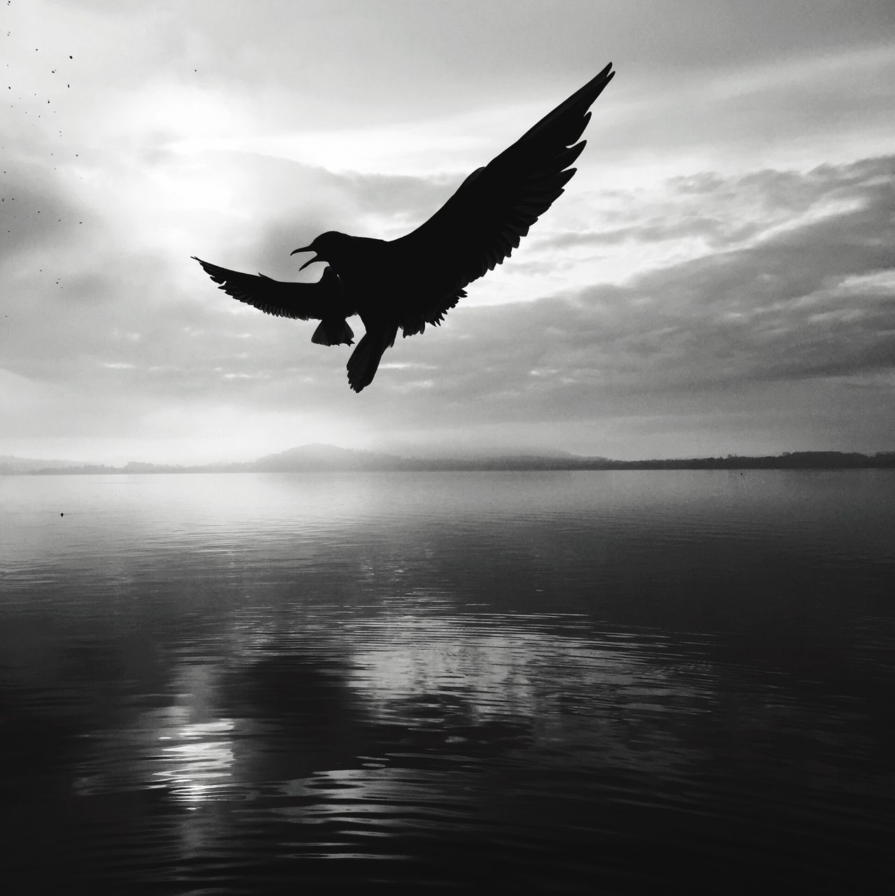 Fighting Seagull Seagull In Black&white From My Point Of View Perspective Amazing Birds  Look Up IPhoneography Flying Seagull Seagulls Here I Come Zugersee Going The Distance Learn & Shoot: Simplicity Showcase: November Photography In Motion