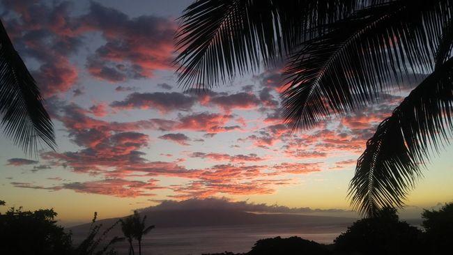 PostHurricaneMadeline Sunset Palm Tree Beauty In Nature Maui, Hawaii Maui Sunset Mauiphotography
