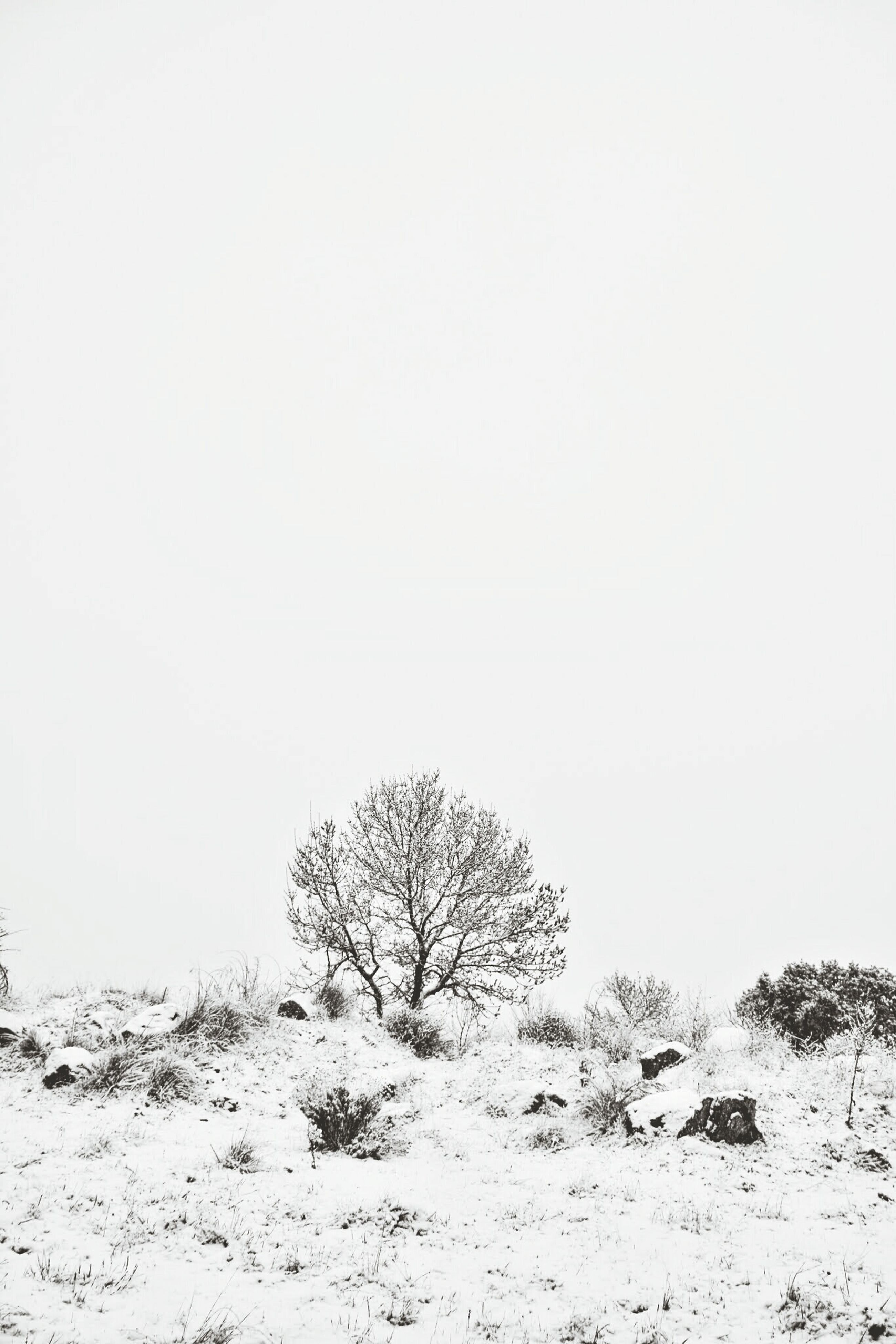 clear sky, copy space, tranquility, tranquil scene, landscape, tree, nature, scenics, beauty in nature, snow, non-urban scene, winter, cold temperature, sand, field, remote, day, non urban scene, outdoors, desert