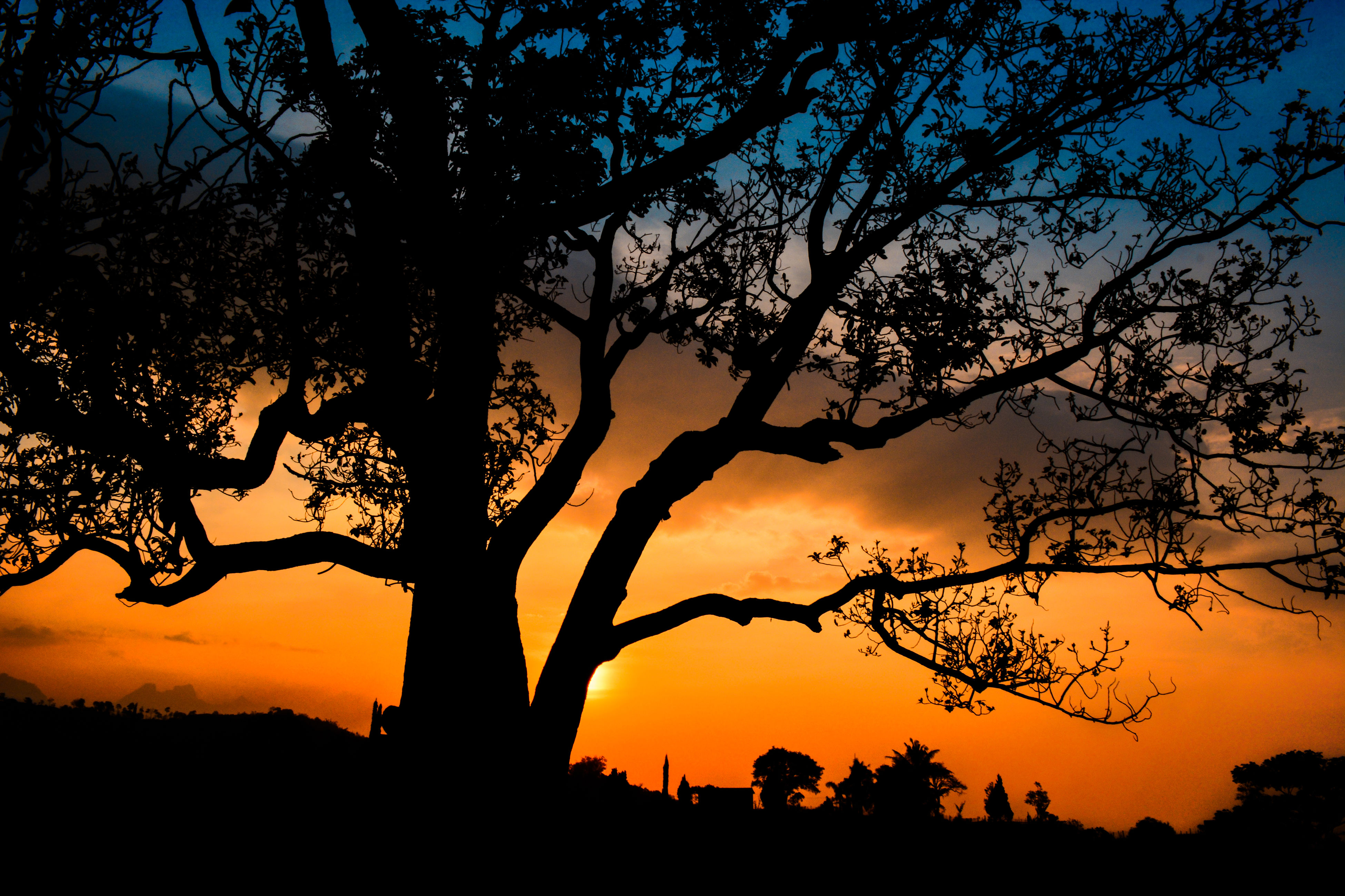 silhouette, sunset, tree, tranquility, tranquil scene, beauty in nature, scenics, branch, sky, nature, orange color, bare tree, idyllic, low angle view, tree trunk, growth, outline, outdoors, majestic, no people