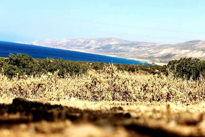 الاشجار الطبيعة البحر Nature