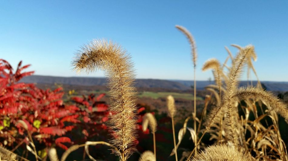Growth Plant Nature Beauty In Nature Sky Uncultivated No People Outdoors Freshness Field Close-up Fragility Autumn Sumac Grass Distant View Distant Mountains Scenics Maryland USA Autum Colors Town Hill Overlook The EyeEm Collection Miles Away The Premium Collection