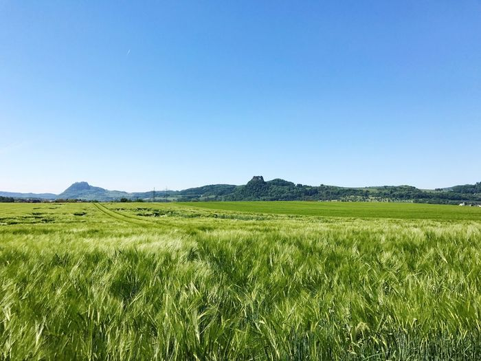 Clear Sky Copy Space Field Nature Agriculture Landscape Blue Tranquil Scene Growth Beauty In Nature Tranquility No People Day Outdoors Rural Scene Cereal Plant Grass Sky Wiese  Feld Felder Wiesen Nature Sommergefühle