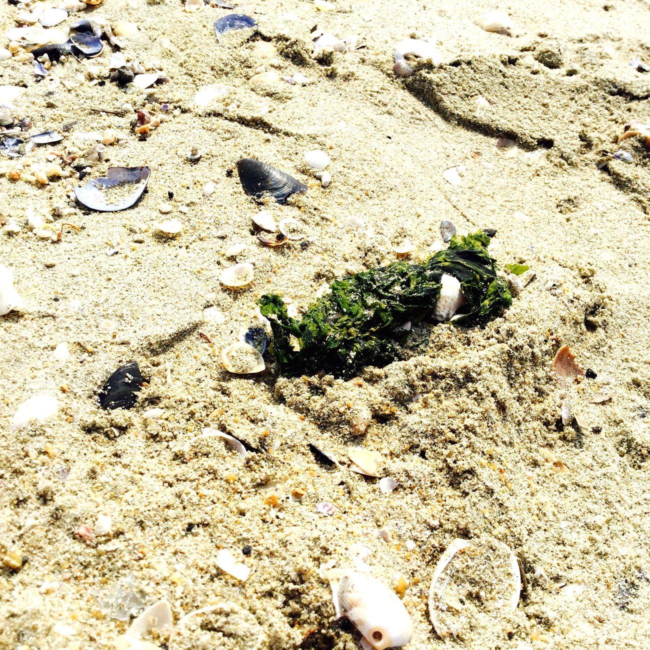 海藻 海の生物 緑 砂浜 海 写真好きさんと繋がりたい カメラ女子 海