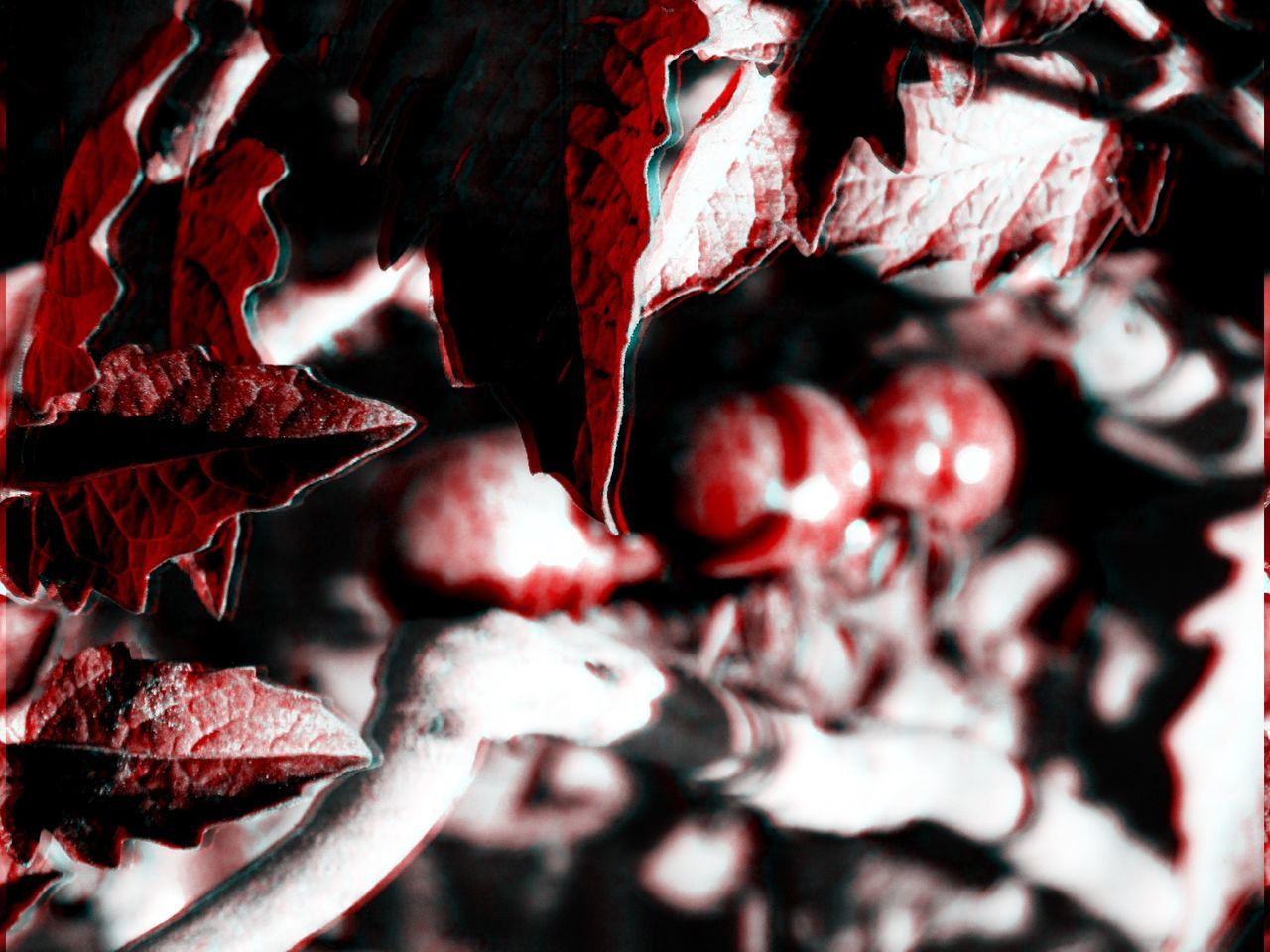 Life goes on!! (Collection) 3D Art 3d Collection 3D Composition 3D Effect 3D Photo 3Dart Backgrounds Beauty In Nature Black Black & White Black And White Blakck And White Blue Close-up Fragility Freshness Leaves Nature No People Outdoors Outdoos Red Red Tomatoes White