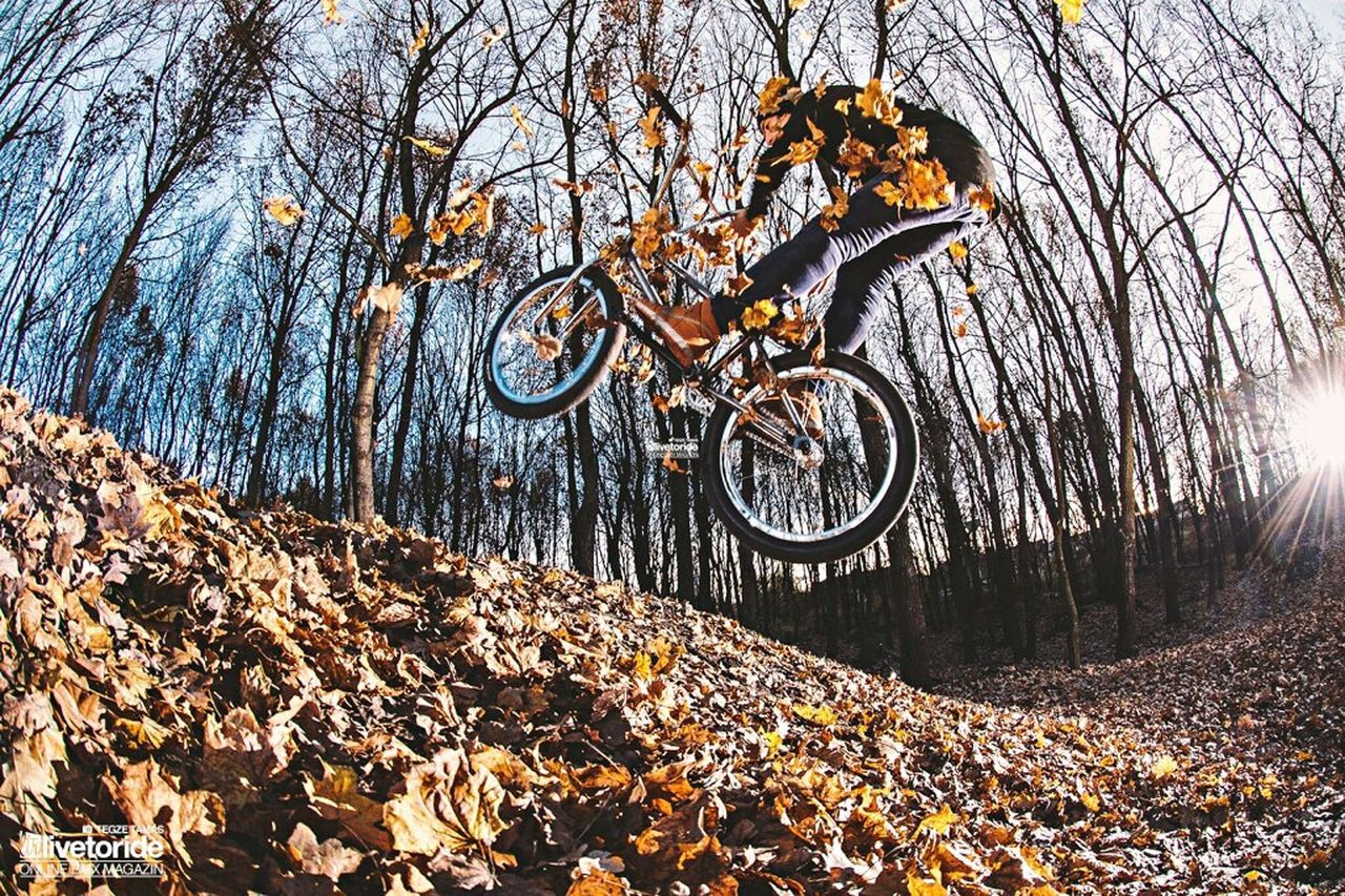 autumn, change, leaf, tree, bicycle, nature, day, outdoors, low angle view, no people, bare tree, forest, branch, sky