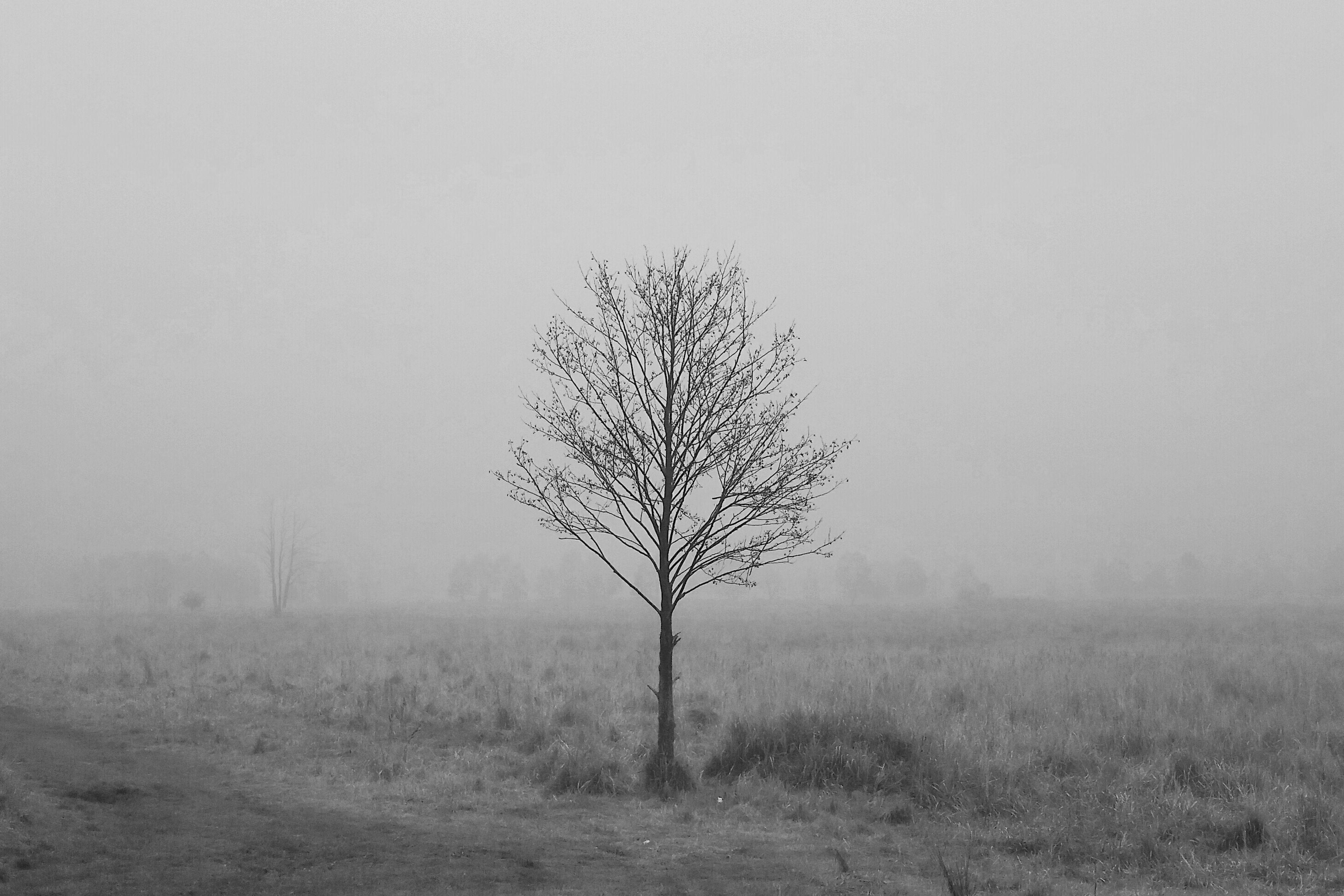 Kobiór Tychy Igerspoland Lubiepolske Czarno-białe Igerstychy Minimalism Minimal Tree