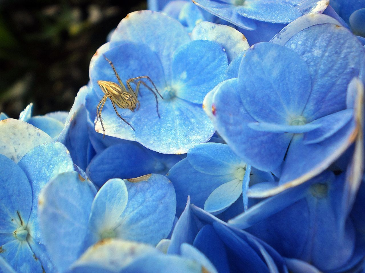 Blue Nature Close-up Flower Beauty In Nature No People Outdoors Plant Spider Minerva Arachnid