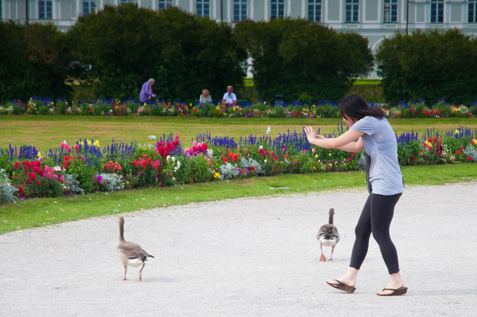 Beautiful stock photos of enten, animal themes, flower, pets, park - man made space