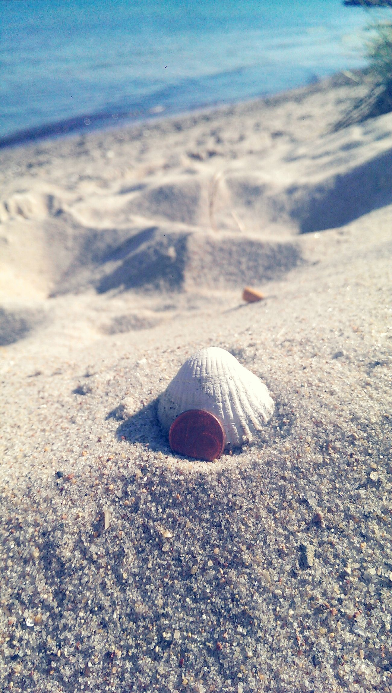 1Cent HTC_photography Enjoying The Sun Sunbathing Shell Sea And Sand Bla Bla