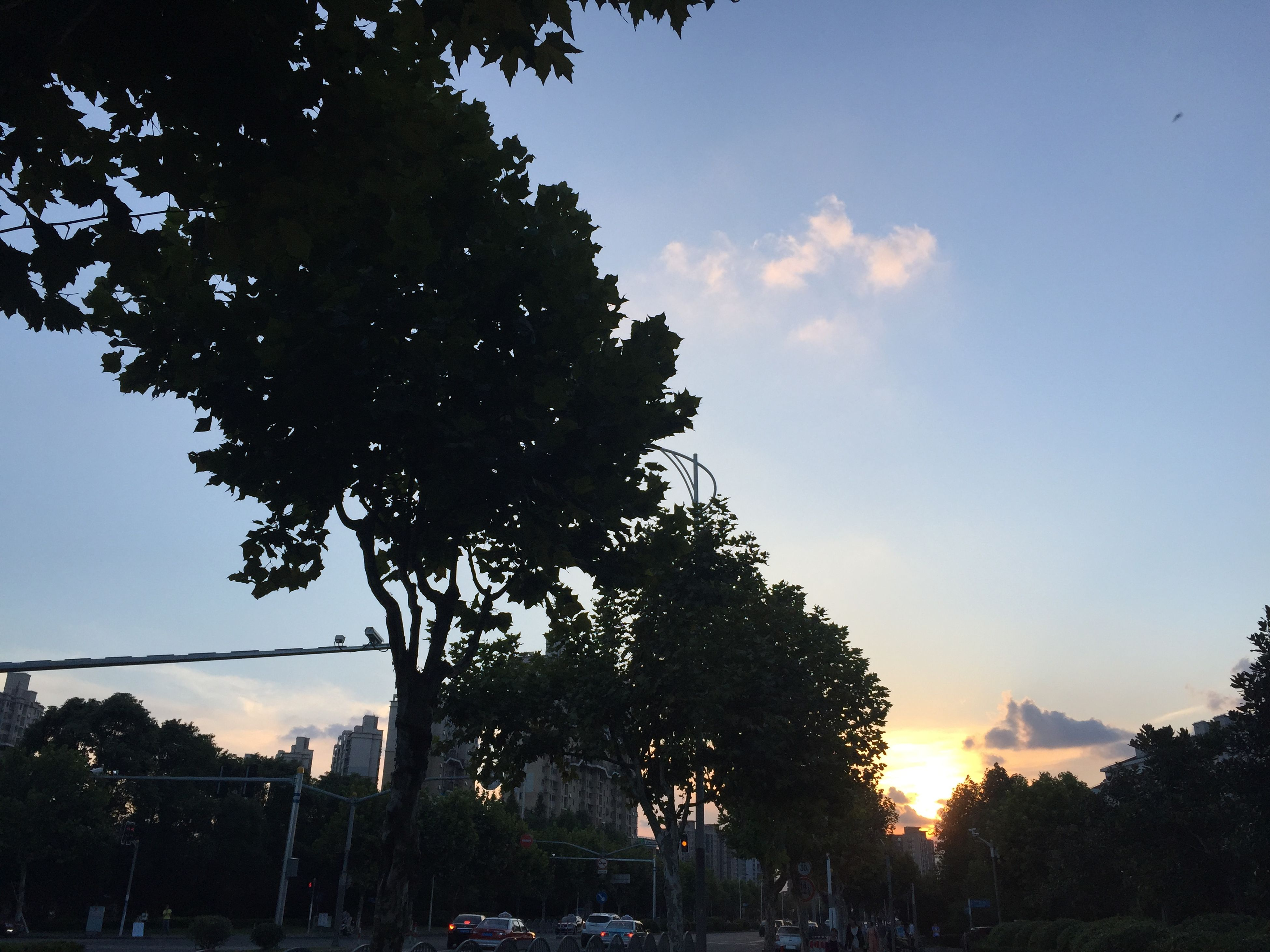 tree, sunset, sky, silhouette, low angle view, growth, nature, beauty in nature, tranquility, sunlight, scenics, branch, built structure, tranquil scene, outdoors, no people, cloud - sky, building exterior, architecture, street light