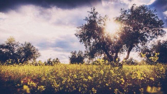 Amarillo primavera. Landscape LaMancha Spring Landscape #Nature #photography