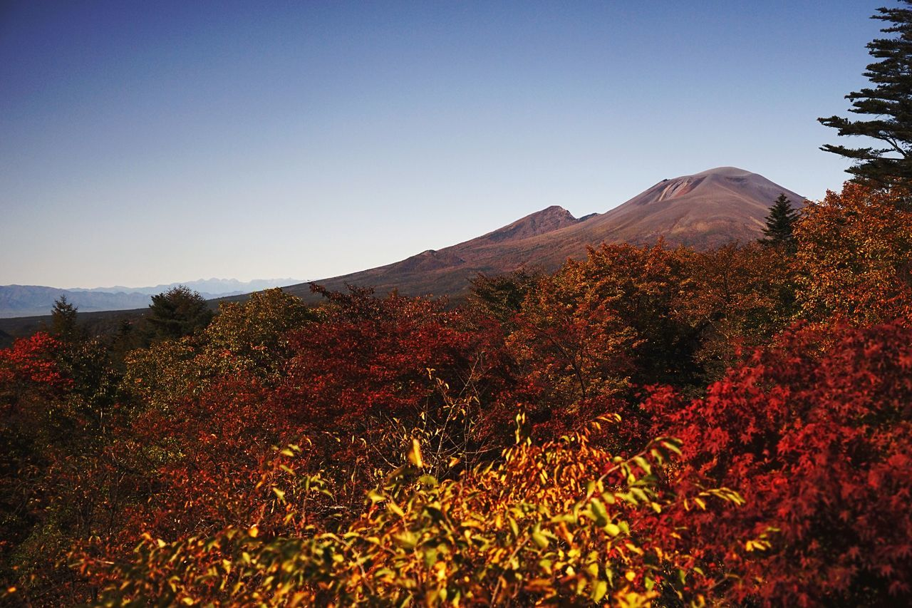 My Year My View Clear Sky Nature Beauty In Nature Scenics Mountain Tree Landscape Growth Outdoors No People Plant Tranquil Scene Day Sky Tranquility Autumn Sunrise Multi Colored Long Exposure Mt.asama