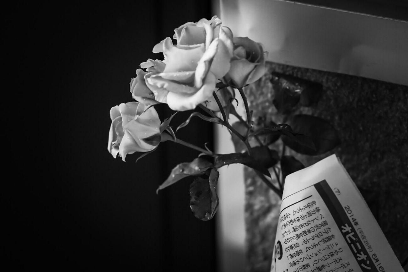 誰かの忘れもの? Rose♥ Flower Porn Pretty Rose  EyeEm Flower