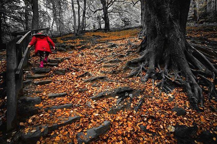 Autumn walk.. Coloursplash Nature Fiftyshades_of_nature CapturingBritain Ig_britishisles Gloomgrabber Rsa_nature Littlepig_features