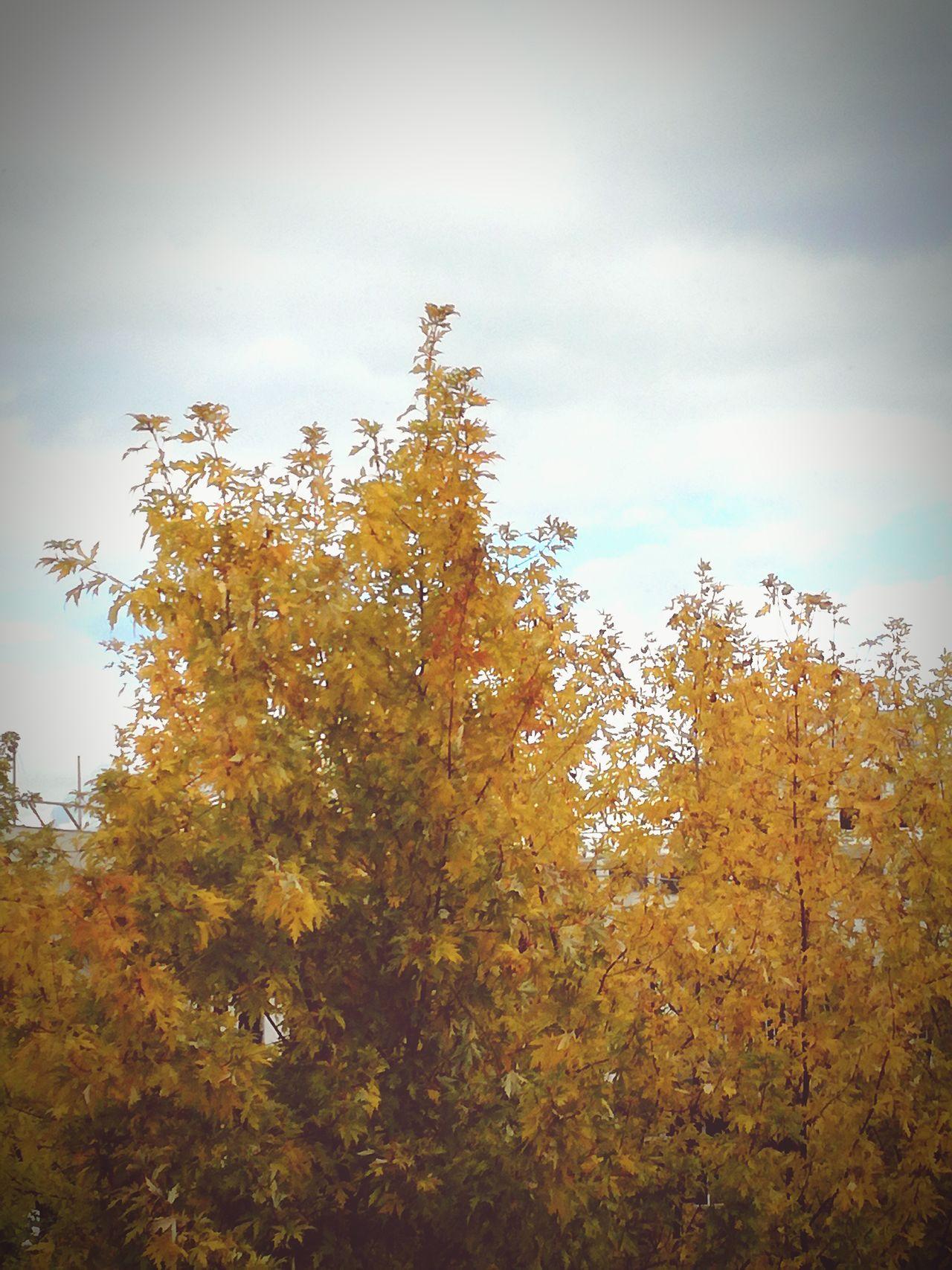 L'hiver viens First Eyeem Photo